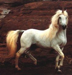 Robert Vavra is the best horse photographer.