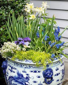 """139 """"Μου αρέσει!"""", 19 σχόλια - Susan Nock (@sngardendesign) στο Instagram: """"Spring flowers - loving this color theme and this amazing container... . . . #springflowers…"""" Plants, Instagram, Plant, Planets"""