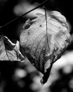 Photography by Nicholas Speer #tree #nature #blackandwhite #art #mothernature #leaf #peaceful #photography