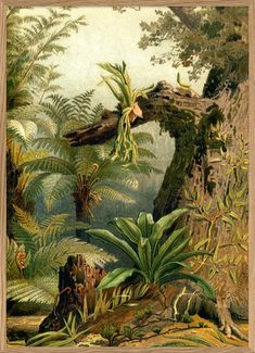 This astonishing encyclopedian print brings an great atmosphere to your wall. The original image dating back to the Available in various sizes. Landscape Illustration, Botanical Illustration, Watercolor Painting Techniques, Watercolor Paintings, Jungle Art, African Art Paintings, Tropical Landscaping, Tropical Art, Gravure