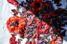 Andrea_gentl_flowers_natural_dye_eyeswoon20
