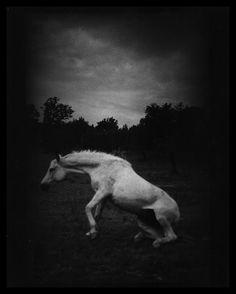 Giacomo Brunelli • The Animals Horse