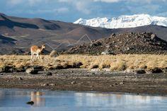 Ruta altiplano / Altiplano route