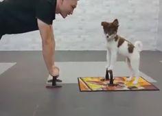 """Virales Video """"Hund macht Fitnessübungen"""""""