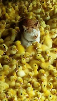 A catastrophe, no, things are just ducky...