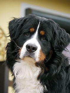 Easy Dogs / Amani's Kokos-Joghurt-Kekse, Hundekeksrezept von Evi aus Burgthann, Easy Dogs Feinschmeckerguide