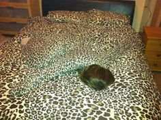 This Leopard Print Lover and Her New Favorite Bed