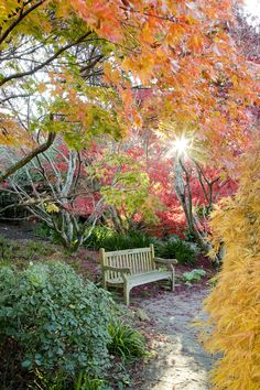 Blue Mountains Botanic Garden Autumn Colour and Bench - credit Greg Bourke Australian Native Garden, Picnic Area, Autumn Garden, Blue Mountain, Outdoor Furniture, Outdoor Decor, Botanical Gardens, Places To Go, Bench