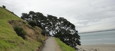 On Mount Maunganui Mount Maunganui, New Zealand, Country Roads, Beach, Water, Outdoor, Gripe Water, Outdoors, The Beach