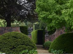 Heckenpflanzen und hohe Laubbäume im Garten