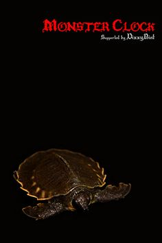 Pig-snouted River Turtle