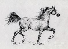 running-arabian-horse-drawing-1-angel-tarantella.jpg 900×652 pixels