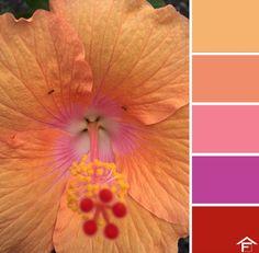 palette, colore, fiori, piante, giardino, tendenze, stili, ispirazione