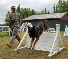 Pfc. Lynnette Dalle, a military working dog handler with the 28th Military Police Detachment at Fort wainwright, Alaska, shows some of the obedience and special skills her MWD, Gina, is taught at the obstacle course outside of the kennels at the start of their day. (U. S. Army photo by Staff Sgt. Trish McMurphy, USARAK Public Affairs)