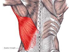 How to Relieve Pain Between the Shoulder Blades - Lat and Rhomboid Release - Mobility Mastery Shoulder Pain Relief, Neck And Shoulder Pain, Neck Pain, Psoas Muscle, Muscle Pain, Shoulder Blade Muscles, Neck And Shoulder Exercises, Upper Back Exercises, Trigger Point Massage