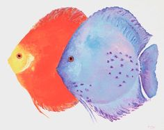 rainbow colors Discus Original watercolor painting by ORIGINALONLY