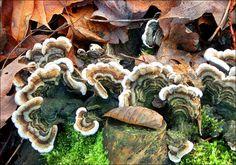 Pilze im Laub - Jahreszeiten - Galerie - Community
