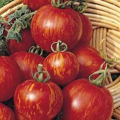 Tigerella Tomato - supposed to be very tasty