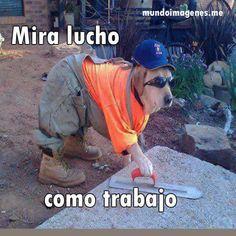 Imagenes Graciosas De Animales En Facebook - Mundo Imagenes Frases Actuales
