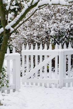 White picket fence in the snow, Hillhaven Garden, Washington I Love Snow, I Love Winter, Winter Day, Winter Snow, Winter White, Winter Christmas, Christmas Time, Garden Gates And Fencing, White Picket Fence