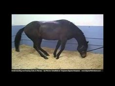 ▶ Colic in horses: Horse Vet explains what owners should know - YouTube