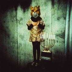 hanukkah fox ©pamela klaffke