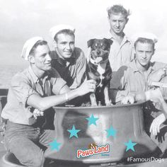 """Sinbad was a mixed-breed canine sailor aboard the US Coast Guard Cutter George W. Campbell. Sinbad served 11 years sea duty in the Coast Guard including combat in World War II. The dog was  intended to be a gift to a girlfriend of Chief Boatswain's Mate A. A. """"Blackie"""" Rother but the girlfriend's apartment didn't allow dogs. (Photo Credit: U.S. Coast Guard Historian's Office) #dogs #famousdogs"""