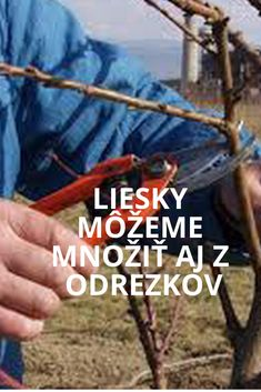 Liesky a ich množenie Facebook Sign Up