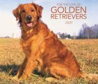 Just like my Andi girl <3.. I Love Golden Retrievers!                          best dogs ever...miss them both