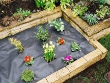 Remember to use a good quality membrane to control those annoying weeds in your vegetable garden. #GrowYourOwnVeg