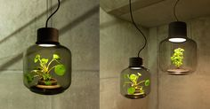 Terrarium Lamps by Nui Studio Light Your Space with Suspended...