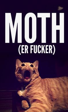this is funny.  How Hunter S. Thomcat reacts to a moth. (thebloggess.com)