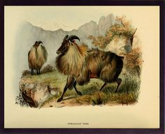 Animal art vintage animal old paper animal by uniquevintagee, $1.00