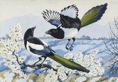 The Wildlife Art Gallery - Charles Tunnicliffe Nature Artists, Rabe, Vintage Birds, Bird Design, Wildlife Art, Bird Art, Beautiful Birds, Art Blog, Pet Birds