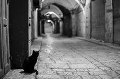 Gato de Jerusalem