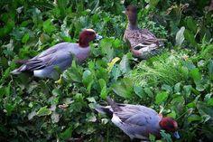ハイホーハイホー。 忙しいね、アナタたちも。 さて、 ワタシも今年の仕事を納めに帰ろ。   #bird #鳥