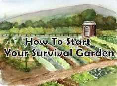 To Quickly Start & Maintain a Survival Garden after a societal/economical collapse, where no outside resources are available. Most gardening books talk Homestead Survival, Survival Prepping, Survival Skills, Emergency Preparedness, Survival Stuff, Gardening Books, Gardening Tips, Farm Gardens, Outdoor Gardens