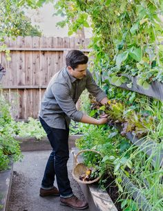 I love our vertical garden that I created using rain gutters as planters. Check out my YouTube channel for the complete how to video. Photo: Thomas Story for Sunset Magazine