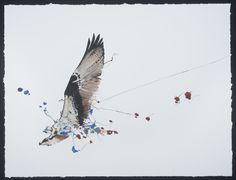 VT Artist Nissa Kauppila. #Birds #VTArt #VTartist #Vermont #BirdExplosions