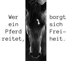 ein schwarzes pferd mit schwarzen augen und einer schwarzen mähne, pferdesprüche und schöne pferdebilder, ein pferdebild mit spruch zum thema pferde und reiten