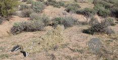 Really good hiding meeen!