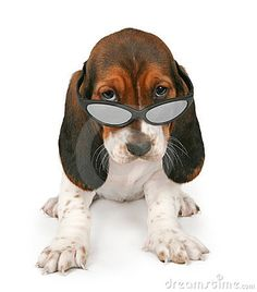 Basset Hound Puppy Wearing Sunglasses by Adogslifephoto, via Dreamstime