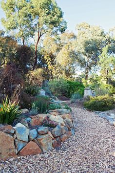 Image result for australian native gardens