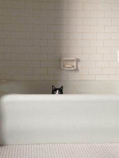 "After watching Michael Keaton on SNL, I found Calvin in his chambers, whispering, ""I'm Bathman."" ~~ Houston Foodlovers Book Club Cat Bath, I Love Cats, Cool Cats, Funny Cats, Funny Animals, Cute Animals, Crazy Cat Lady, Crazy Cats, Bath Time"