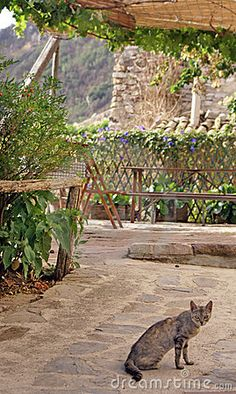 Cat In Agriturismo - Download From Over 53 Million High Quality Stock Photos, Images, Vectors. Sign up for FREE today. Image: 5733845