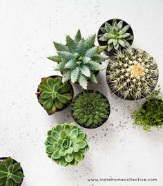 cool Plants in store - Styling/Photography: Indie Home Collective...