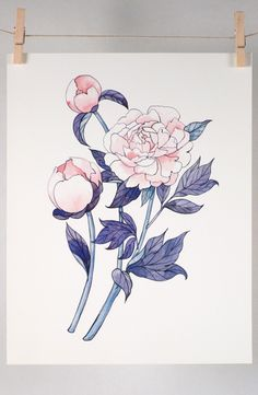 Tree Peonies Art Print of watercolor illustration by Four Wet Feet