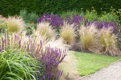 Garden Ideas, Border ideas, Perennial Planting, Perennial combination, Summer border, Fall Border, Grass Border, Salvia Nemorosa, Stipa, Stipa Tenuissima, salvia Mainacht, Salvie Caradonna, Salvia Amethyst