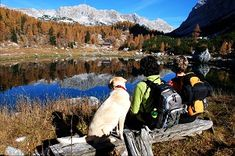 In many cases, the best season for summer sports like hiking, paddleboarding and biking may only be a few months long. Try these fall dog activities to get Hiking Dogs, Hiking Trails, Dog Activities, Outdoor Activities, Pet Plan, Elk Antlers, Dog Travel, Travel Tips, Travel Abroad