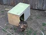 Muscovy Duck Nesting Boxes for